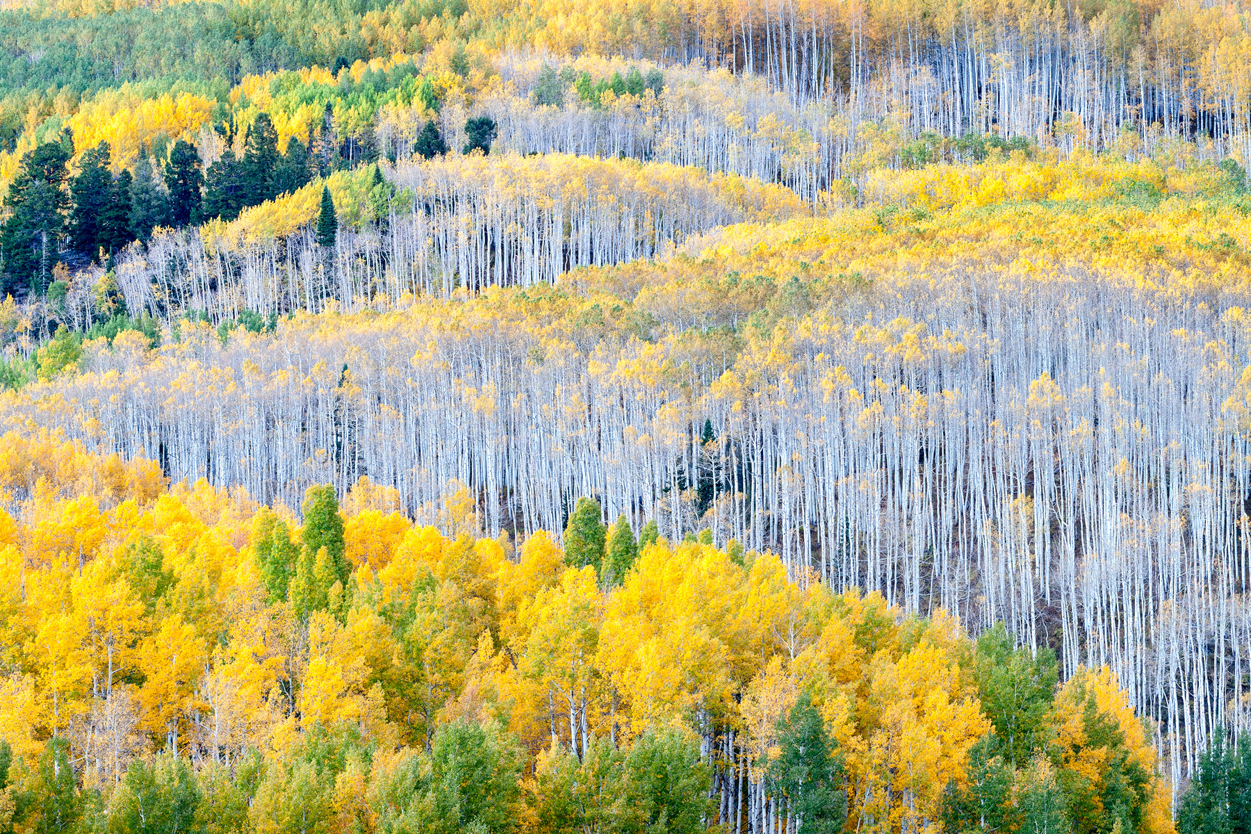 Rows Of Autumn - CO_7505