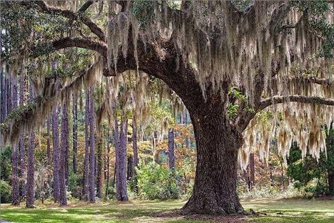 South Carolina landscape nature photography