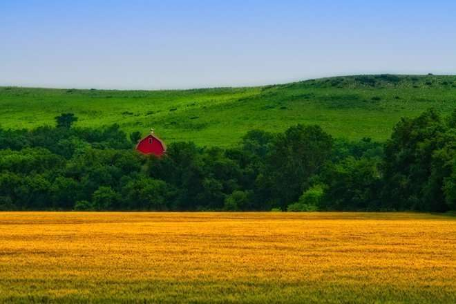 Kansas Wheat Field & Barn