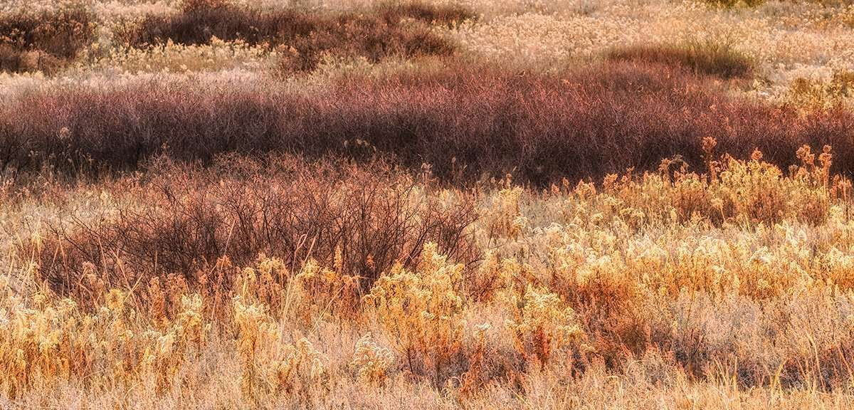 Winter's Prairie - FLWI_9508