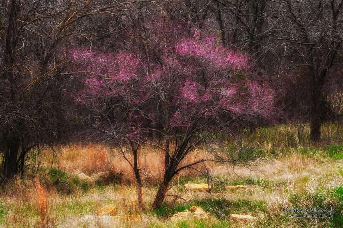 nature, landscape, photography