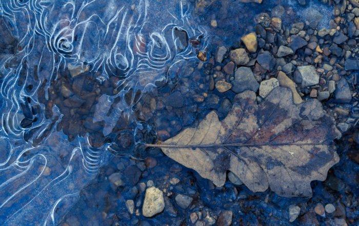 Oak Leaf In Shallow Frozen Stream | ©Brad Mangas